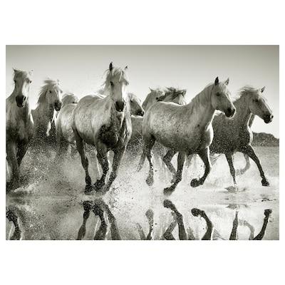 PJÄTTERYD Picture, Wild horses, 70x50 cm