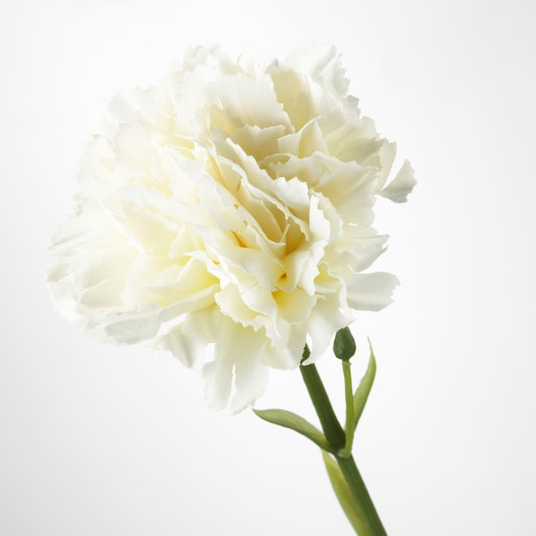 SMYCKA Artificial flower, carnation/white, 30 cm