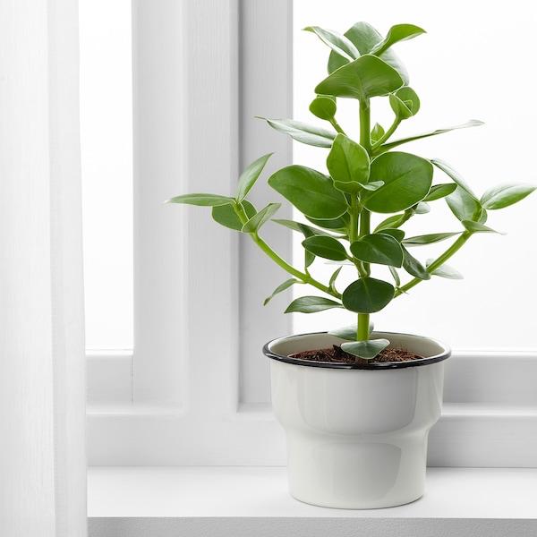 CITRONSYRA Plant pot, in/outdoor/white, 12 cm