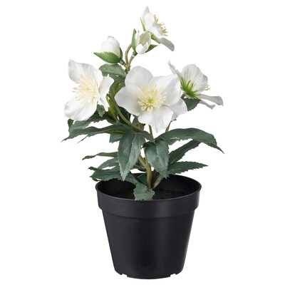 FEJKA Artificial potted plant, in/outdoor Christmas rose, 12 cm