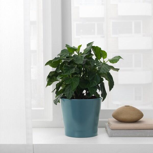 PAPAJA آنية نباتات, أزرق غامق, 12 سم