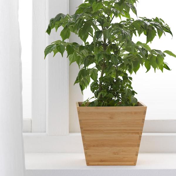 VILDAPEL آنية نباتات, خيزران, 12 سم