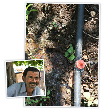 Agricultor indio en el proyecto 'Better cotton'.