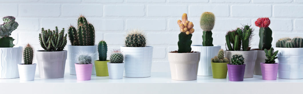Plant pots in different sizes and colours with cactuses