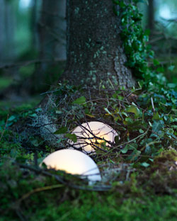SOLVINDEN solar-powered lighting on a bed of moss and ivy