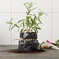 Make a plant pot with a plastic bag wrapped in EMMIE ROS fabric