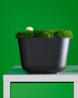 Moss planted in BOHOLMEN plastic washing-up bowl