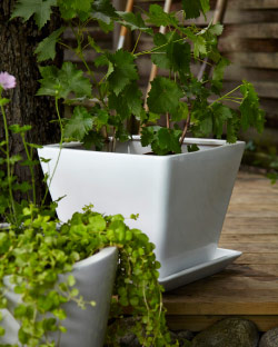 White plant pots in earthenware with green plants