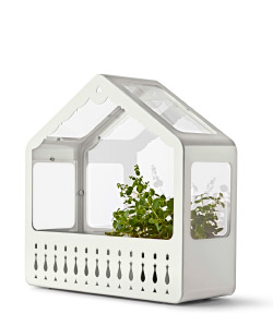 Cutout image of the IKEA PS 2014 Greenhouse containing plants.