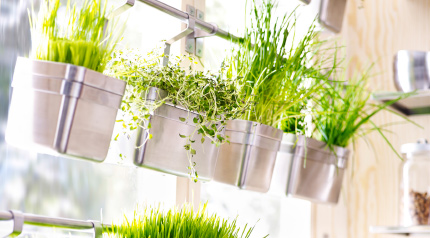 Stainless steel IKEA rails fixed across a window with containers holding wheatgrass.