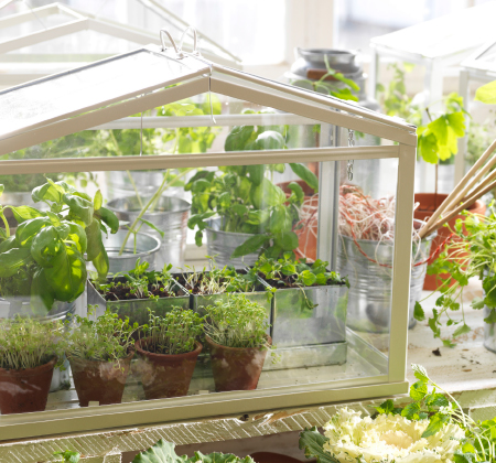 One of our plant stands, a miniature green house with green plants