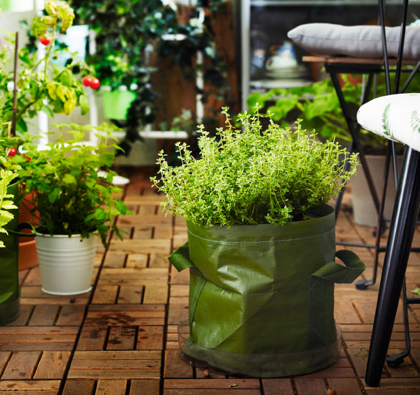 A green bag with thyme standing on the wooden balcony floor.