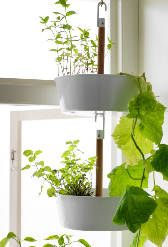 A hanging planter with green plants, hanging in a window.