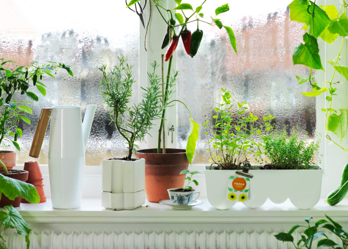 A windowsill with a white watering can with wooden handle, self-watering plant pot and planter with green plants.