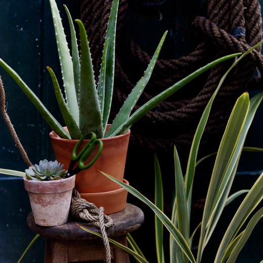 A terracotta plant pot and saucer with an aloe vera plant.
