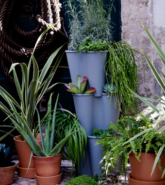 Plant pots in different sizes and material with green plants.