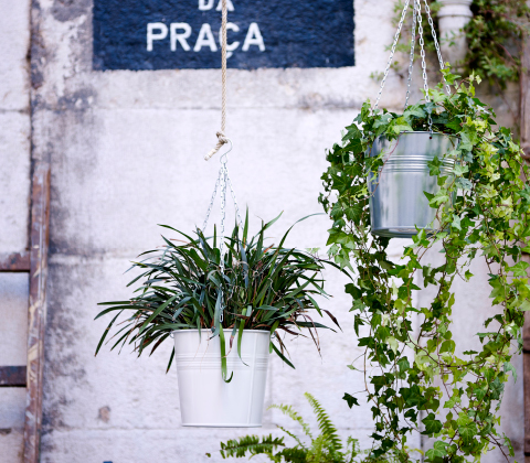 Two hanging planters, one white and one galvanized, with green plants.