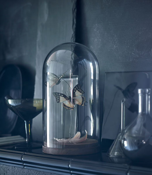 Butterflies shown in a glass dome with a wood base.