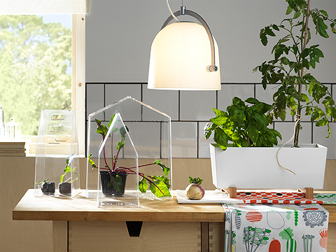 A set of three greenhouses in transparent plastic, one large and two small, with green plants inside. And a white rectangular plant pot with bamboo feet.