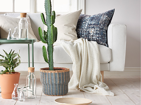 A tall cactus and smaller potted plant in front of a white sofa with white throw and blue patterned cushion.