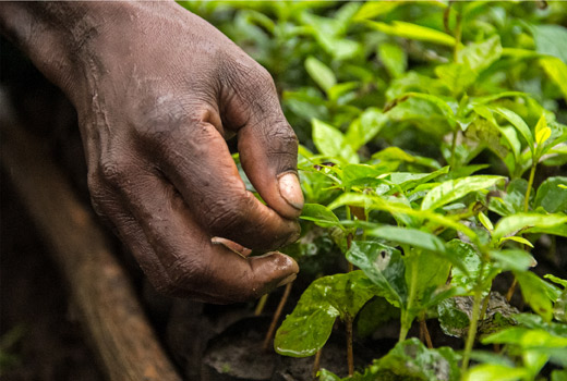 The new IKEA PÅTÅR filter coffee with 100% Arabica beans from Uganda is a result of an IKEA Social Business Initiative. The initiative gives farmers the financial security to plan long term, the coffee cherries can be picked at the right time to maximise quality.