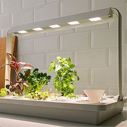 Some green plants in a hydroponic gardening kit by a wall.