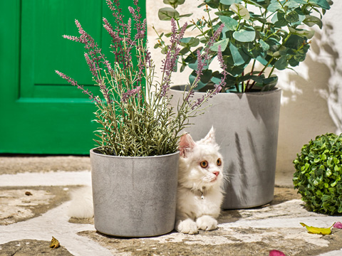 Two gray plant pots sitting outside a green door with greenery coming out and a white cat laying down between the two.