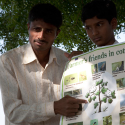 Sundar Borude, a cotton activist, teaches how to sustainably grow cotton