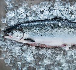 Fresh salmon on a bed of ice