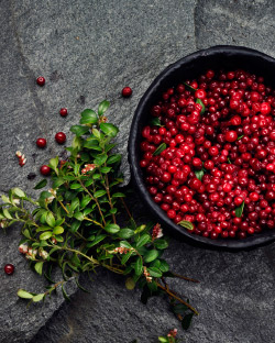 Close up of raw Swedish lingonberries in a bowl.