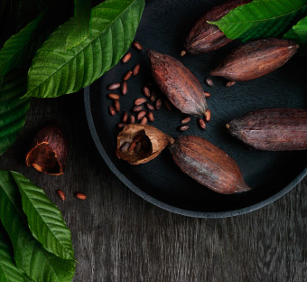 Close up of cocoa beans in a black bowl surrounded by leaves.