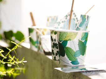 Paper mugs with growing herbs in a window.