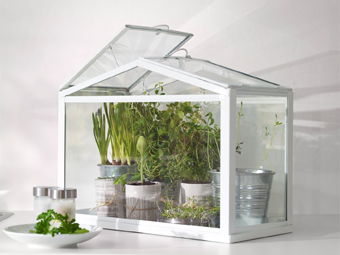A miniature greenhouse filled with green plants.