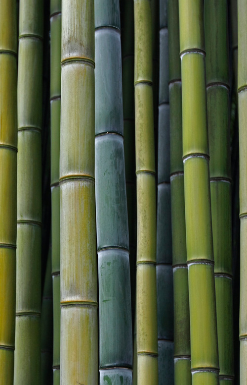Bamboo is one of the fastest growing plants in the world – one of many reasons why we like working with it.