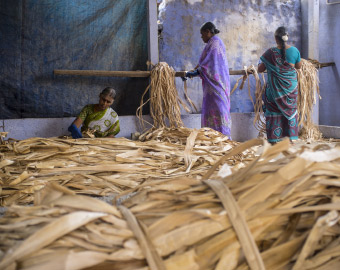 Three Indian women preparing fibres from the stem of banana plants, which will be made into handwoven baskets.
