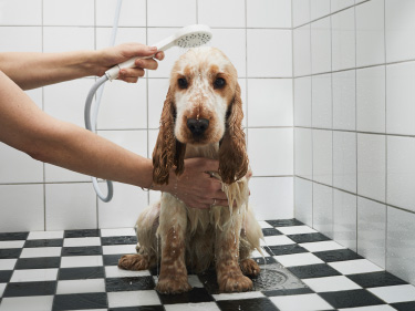 A white IKEA shower handle that saves water while showering a dog.