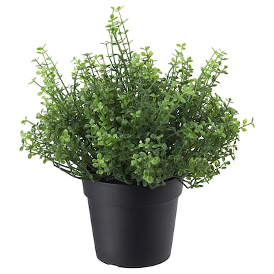 FEJKA Artificial potted plant, in/outdoor Baby's tears, 9 cm