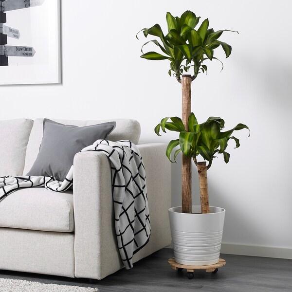 VILDAPEL Plant mover, bamboo, 30 cm