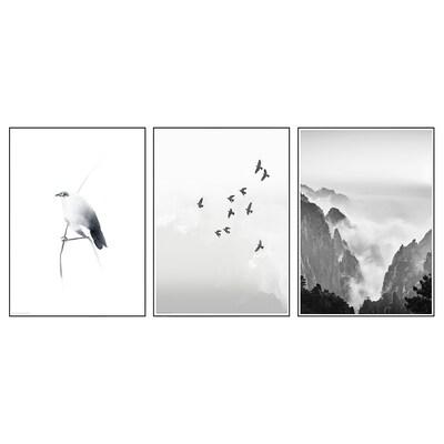 BILD Poster, Bird on twig, 50x70 cm