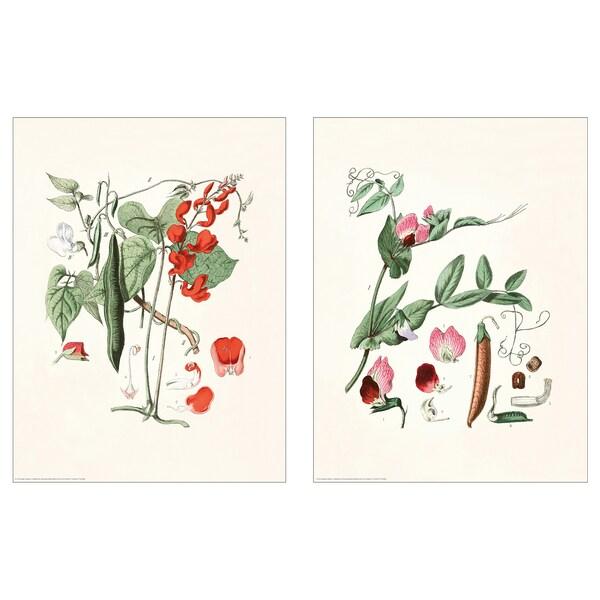 BILD Poster, Botanical, 30x40 cm