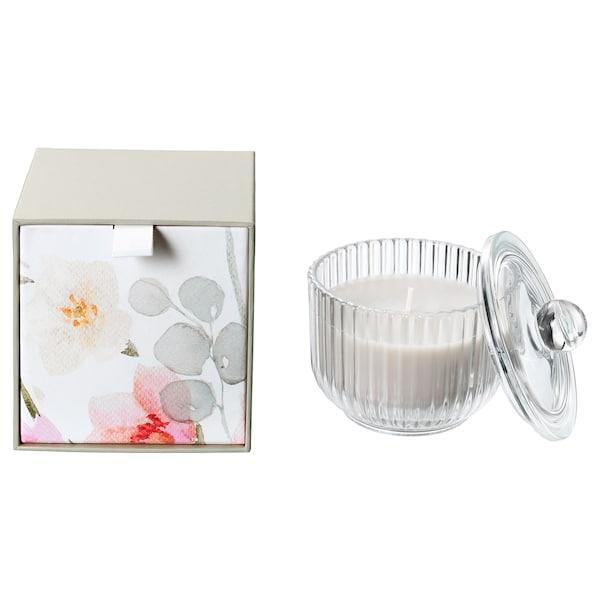 BLOMDOFT Lilin wangi dalam gelas, Gladiolus/kelabu, 9 cm