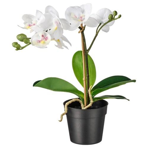 FEJKA tumbuhan tiruan berpasu Orkid putih 9 cm 38 cm