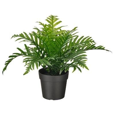 FEJKA Tumbuhan tiruan berpasu, dalam/luar  Pokok paku pakis Polypodium, 9 cm
