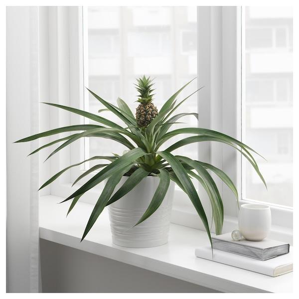 Ikea Ananas