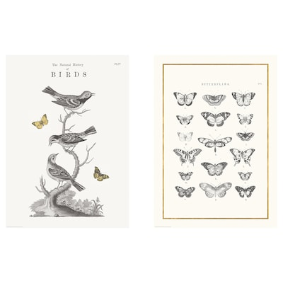 BILD Poster, Flying creatures, 50x70 cm