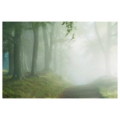 BILD poster De weg door het bos 91 cm 61 cm