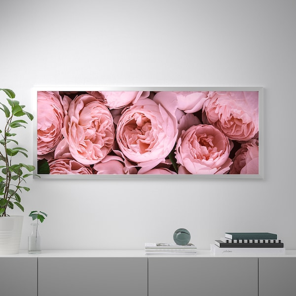 BJÖRKSTA foto met lijst Roze pioenrozen/aluminiumkleur 140 cm 56 cm