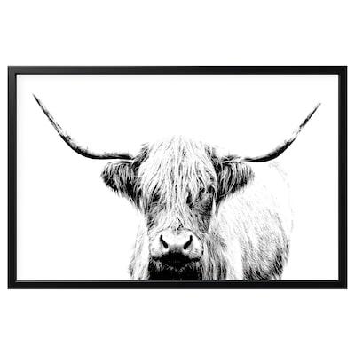 BJÖRKSTA Foto met lijst, koe met hoorns/zwart, 118x78 cm