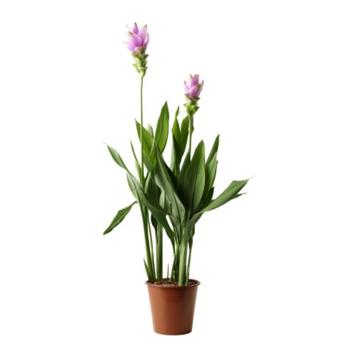 Home / Tuin en balkon / Planten en potten / Planten