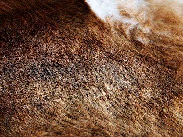 KOLDBY Koeienhuid, bruin